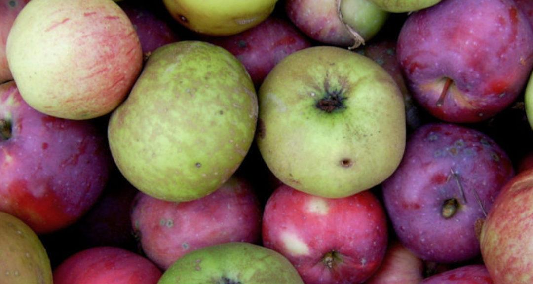 Bewährte Apfelsorten für Streuobstwiesen