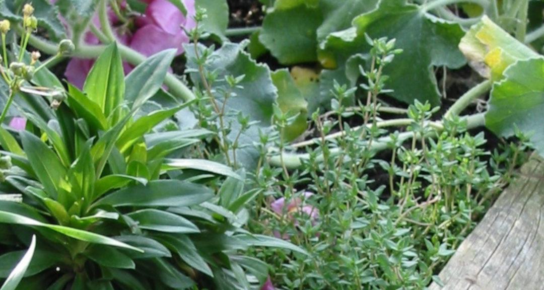 Permakultur im Garten 8: Tipps für Hochbeete