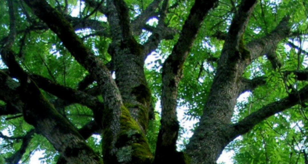 Natur und Permakultur 2: Waldgeschichten