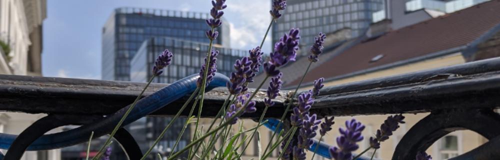 Permakultur auf Balkon und Terrasse 1: Gärtnern ohne Garten – statt Pelargonien
