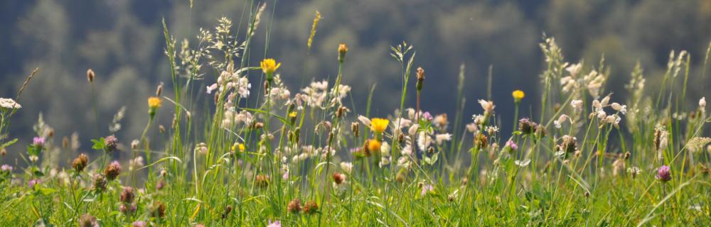 Bauen in der Permakultur 5: Unterstützende Elemente und Nützlingsbiotope im Permakulturgarten
