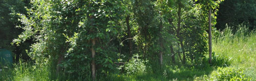 Bauen in der Permakultur 6: Weidenbau im Naturgarten